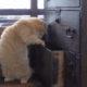 【かわいすぎ注意】ナゾの猫 「みゃーこ」のキュートな姿